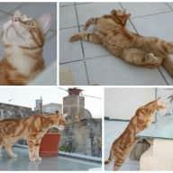 House & Catsitter in the Mediterranean island of Malta
