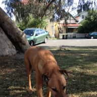 House/dog sitter required for my Rhodesian Ridgeback