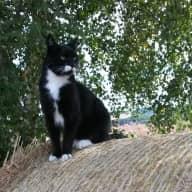 Easy Cat Sit - Rural Perthshire Scotland