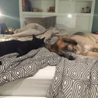 easy-going dog & cat in a large home, quiet neighbourhood in Sydney