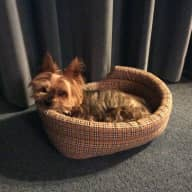 Lovely house on beach, with elderly Yorkshire terrier requires house sitter for four months