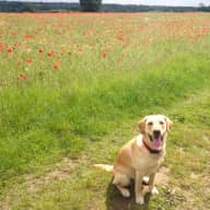 Flexible house/dog sit offered in rural Hertfordshire.