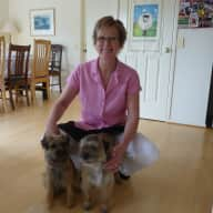 Pet sitter for 2 Border Terriers for 8 weeks August - October 2015