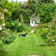 Dog & House Sitter needed for Cotswold Cottage 25th May - 1st June 2015