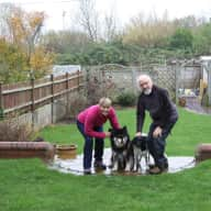 Sitter for our two dogs and house in Barrow-in-Furness, Cumbria