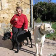 Look after our two loveable Labradors and young Box/setter in Gascony farmhouse situated in a beautiful countryside setting with stunning Pyrenees view.