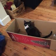 Pet sitter for 1 indoor cat in South West London