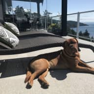 Looking for a sitter for our 1 year old French Mastiff in our ocean view home over looking the Juan de Fuca Straight