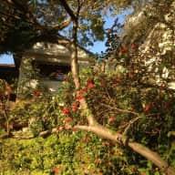 Glorious Garden Bungalow