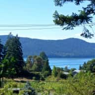 Dog sitter for beautiful Salt Spring Island Sept 27 - Oct 16