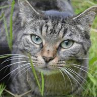 Pet Sitter Needed - November 19th - December 11th, 2017