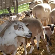 Live in for family pets and sheep in beautiful mtns of California...5 acre ranch with views to dream about