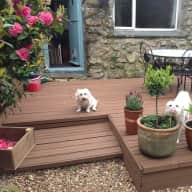 Alfie&frankie chilling on the decking