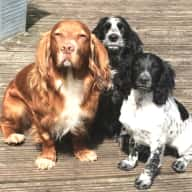 Couple with a family of three dogs and two cats looking for housesitters and pet carers.