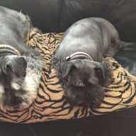 Fur babies sitter