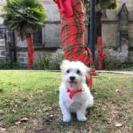 Dogsitter and house minding for lovely 2 bedroom house in Glebe