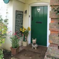 Dog sitter for lovely Yorkie Russell in Farm Cottage
