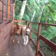 Nicaragua Eco-Lodge needs dog and cat sitter