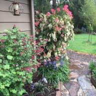 Spring in Corvallis, Oregon