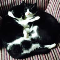 Sitter required for two low maintenance cats in quiet village location