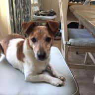 House dog sitting Wiltshire