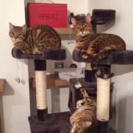 Pet Sitter Needed in Totterdown, Bristol, 3 Gorgeous Cats 3-12/5