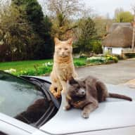 Cat lovers needed for lovely countryside home.