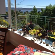 House with a view and sweet old Jack Russell /Fox terrier Sandy Bay Hobart  for the long weekend 8th - 12 March