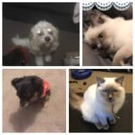 House and pet sitter Dawesville WA