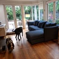 House & dog sitting Prahran