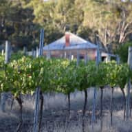 House and pet sitters needed In Legless Dog Vineyard