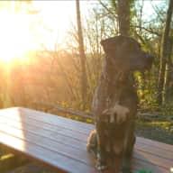 Loving Catahoula wants to play with you!