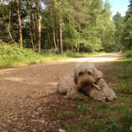 Dog sitter needed for our home in Hove due to holiday
