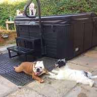 dog sitter required