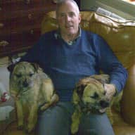 2 Border Terriers on Edge of Forest Of Dean Walks