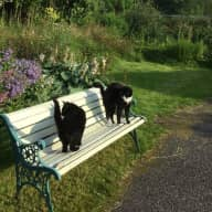 Pet sitting two cats on the West Coast of Scotland..rural Argyll.