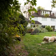 Surrey country home with beautiful Golden Retriever