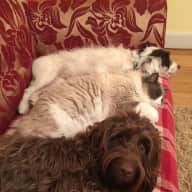 Pet Sitter required for Saturday 6th August to Saturday 20th August 2016