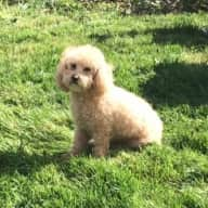 12/24 - 1/3  in Seattle, with easy small poodle