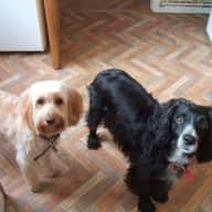 Kind sitter needed for 3 friendly dogs & 2 hens