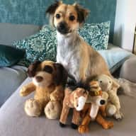 House Sitting - Great small dog and a horse 4 weeks June 22 - July 18