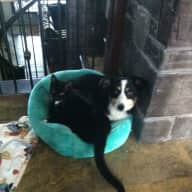 Pet sitter required for our cat and dog for 3 weeks in March