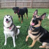 Fun and quiet house with 3 fun dogs