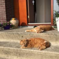 Great house in Amsterdam with two lovely ginger cats