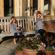 Dog and house sitter needed
