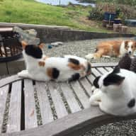Pet and house sitter required for two dogs and cats on the Wild Atlantic way