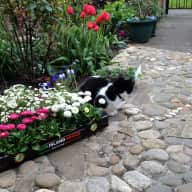 Catsitter wanted in cottage in Shankill, Dublin