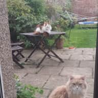 Animal lovers wanted for family home in Edinburgh