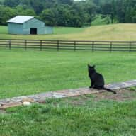 House and Pet Sitter Needed in foothills of the Blue Ridge Mountains