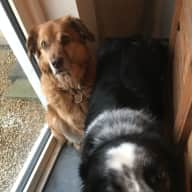 Pet Sitter required for 2 dogs & a Cat